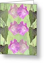 Repeated Morning Glories Greeting Card