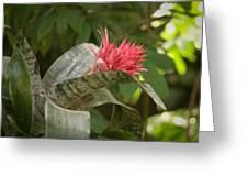 Reptile Garden II Greeting Card