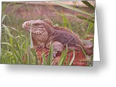 Reptile Land  Greeting Card