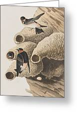 Republican Or Cliff Swallow Greeting Card