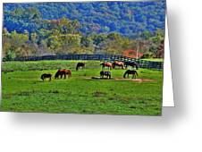 Rescue Horses Greeting Card