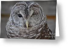 Rescue Owl Greeting Card