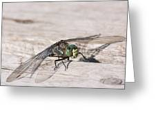 Rescued Dragonfly Greeting Card