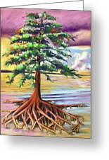 Resilient Cypress Greeting Card