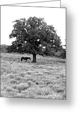 Respite In Black And White Greeting Card
