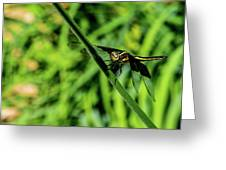 Resting Alert Dragonfly Greeting Card
