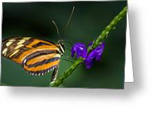 Resting Beauty Greeting Card by Garvin Hunter