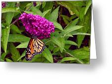 Resting Butterfly 1 Greeting Card