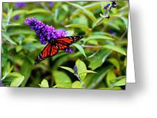 Resting Butterfly 2 Greeting Card
