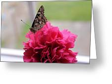 Resting Butterfly Greeting Card by Myrna Migala