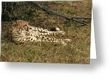 Resting Cheetah Greeting Card