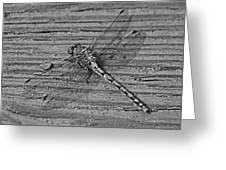 Resting Dragonfly -bw Greeting Card