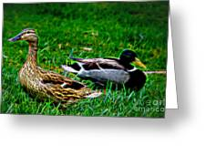 Resting Ducks Greeting Card