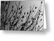 Resting Flock Bw Greeting Card