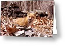 Resting Fox Greeting Card