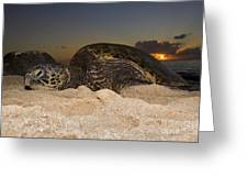 Resting Green Sea Turtle Greeting Card