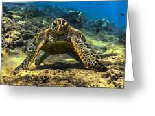 Resting Honu Greeting Card