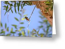 Resting Hummingbird Greeting Card