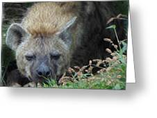 Resting Hyena Greeting Card