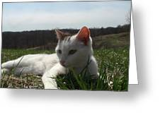 Resting In The Grass Greeting Card