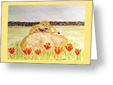 Resting In The Tulips Greeting Card