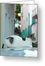 Resting Kitten  Greeting Card