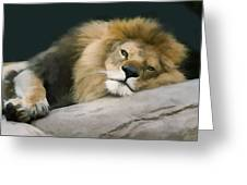 Resting Lion Greeting Card