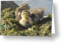 Resting On The Lake Shore. Greeting Card