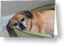 Resting Pooch  Greeting Card