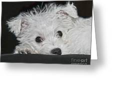 Resting Puppy Greeting Card