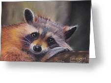 Resting Raccoon Greeting Card