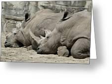 Resting Rhinos Greeting Card