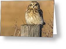 Resting Short Eared Owl Greeting Card