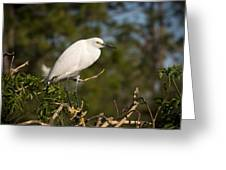Resting Snowy Egret Greeting Card