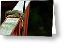 Resting Squirrel Greeting Card by  Onyonet  Photo Studios