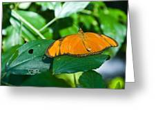 Resting--tropical Butterfly Greeting Card