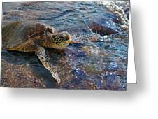Resting Turtle Greeting Card