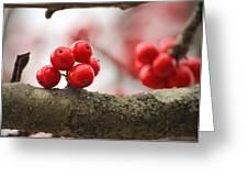 Resting Winter Berries  Greeting Card