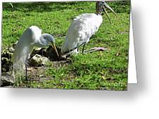Resting Wood Stork And White Egret Greeting Card