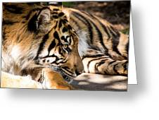 Resting Yet Watchful Tiger Greeting Card