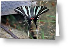 Resting Zebra Swallowtail Butterfly Greeting Card
