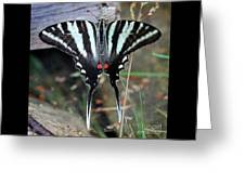 Resting Zebra Swallowtail Butterfly Square Greeting Card