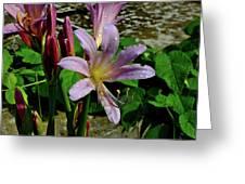 Resurrection Flower Greeting Card