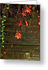 Retaining Wall In Autumn Greeting Card