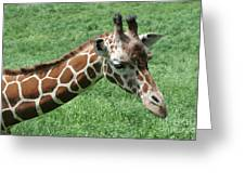 Reticulated Giraffe #3 Greeting Card