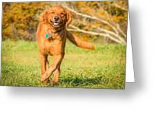 Retriever On The Run Greeting Card