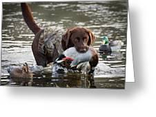 Retrieving Chocolate Labrador Greeting Card