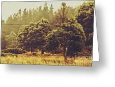 Retro Rural Tasmania Scene Greeting Card