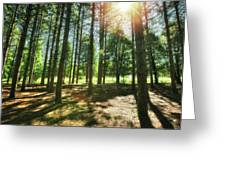 Retzer Nature Center Pine Trees Greeting Card