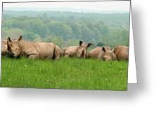 Rhino Heard Panarama Greeting Card